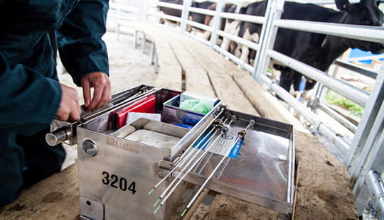 Breeding for fertility in the modern dairy cow